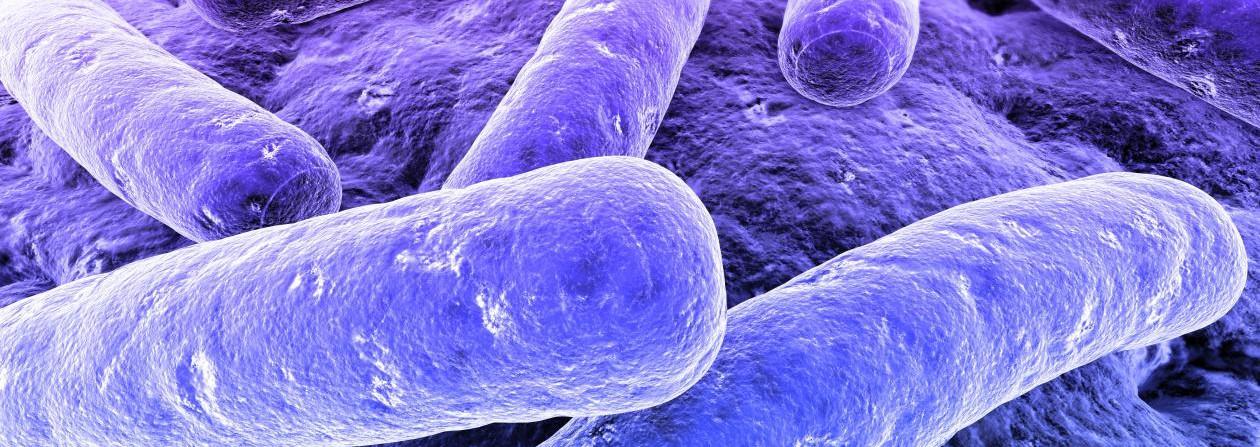 Clasificacion-de-las-bacterias-segun-su-forma-3